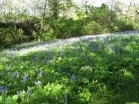 Spring at the Hirsel
