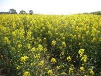 I spy farming in spring